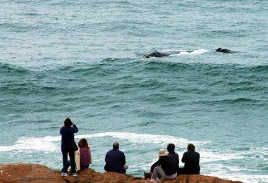 Passeio com as baleias jubarte em Florianópolis